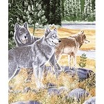 Queen Size Blanket Wolves