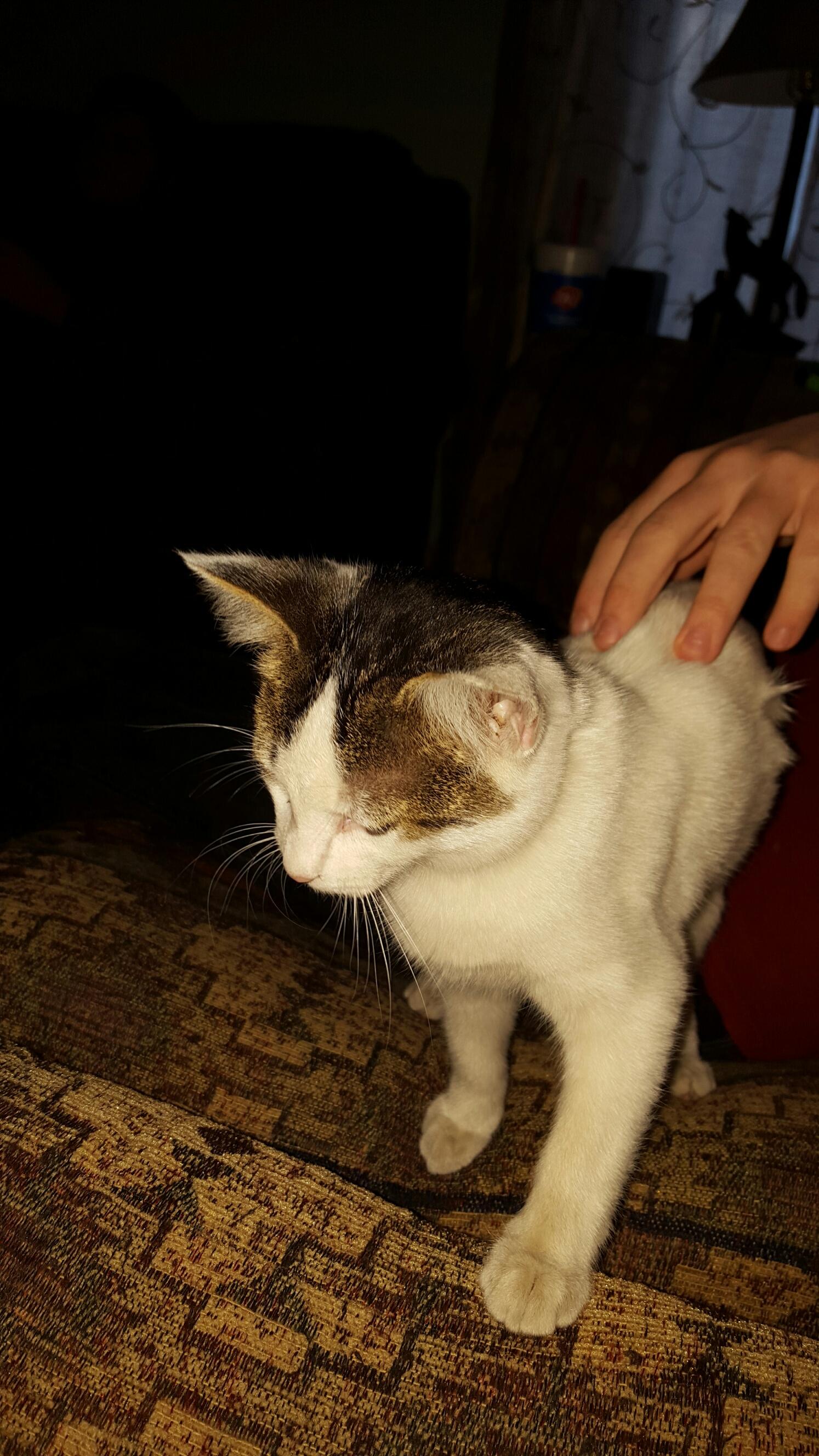 Pretty Kitty Cat