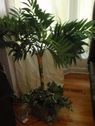 plastic palm potted tree