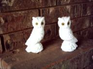 Pair of White Owls - Italy
