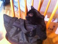 Soft Pack Cat Carrier Small Shoulder Carrier