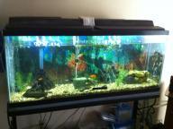 fish aquirium