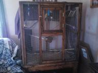parakeets and big wooden cage