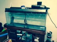 55 gallon saltwater tank with stand and sump, lights,everything