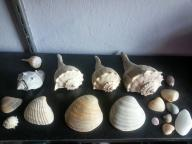 Sea Shells from the Northern Hemisphere