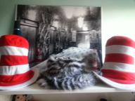 Silly Hats, 2 large Dr Seuss hats and one Zebra Top Hat