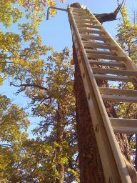 Aluminum 40 ft. Extension Ladder