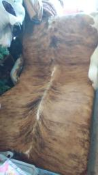 Longhorn cowhide chair/chaise lounge