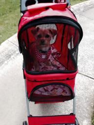 Dog or Cat pet stroller